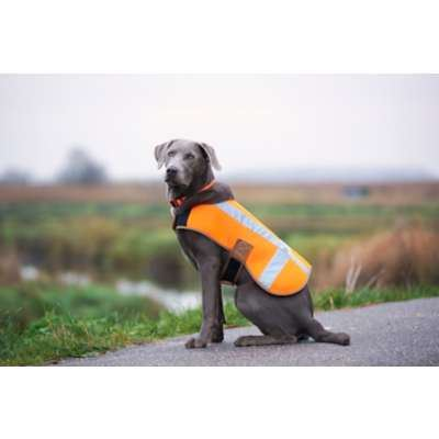 Εικόνα για την κατηγορία Είδη προστασίας για κατοικίδια - Αξεσουάρ  σκύλων